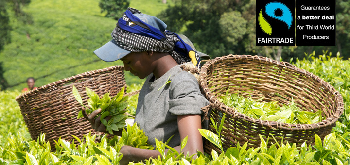 Fair trade premium - is it worth it?