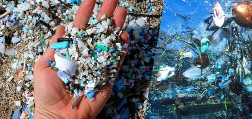 Hidden plastic dangers to marine life