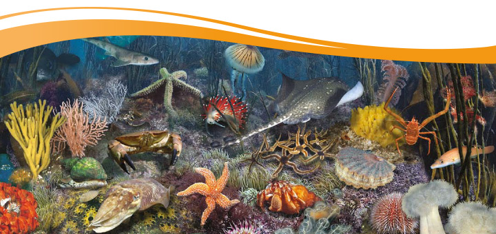 Help marine conservation with Natracare