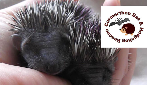 Rescued hedgehogs washed with gentle Bio-D products!